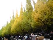 101122sachiko