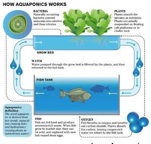 300x300 aquaponics cycle graphic